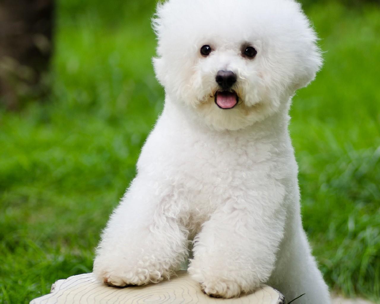 كلاب جميلة