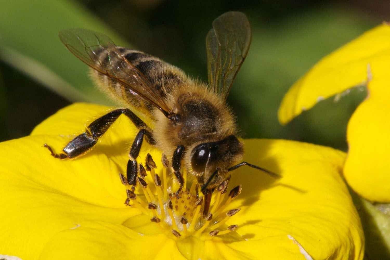 حقائق عن النحل