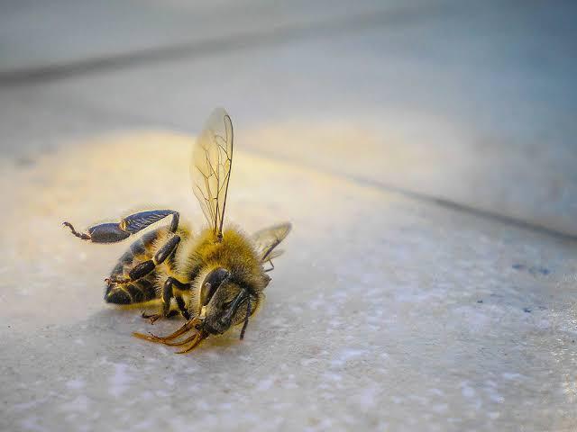 حقائق مذهلة لا تعرفها عن النحل